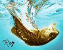 01beast-fish.jpg