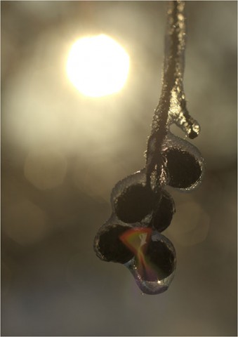 darklon_marching_ice_cubes_th